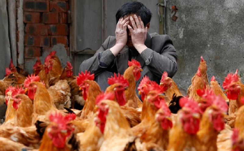 virus flu burung h10n3 di china
